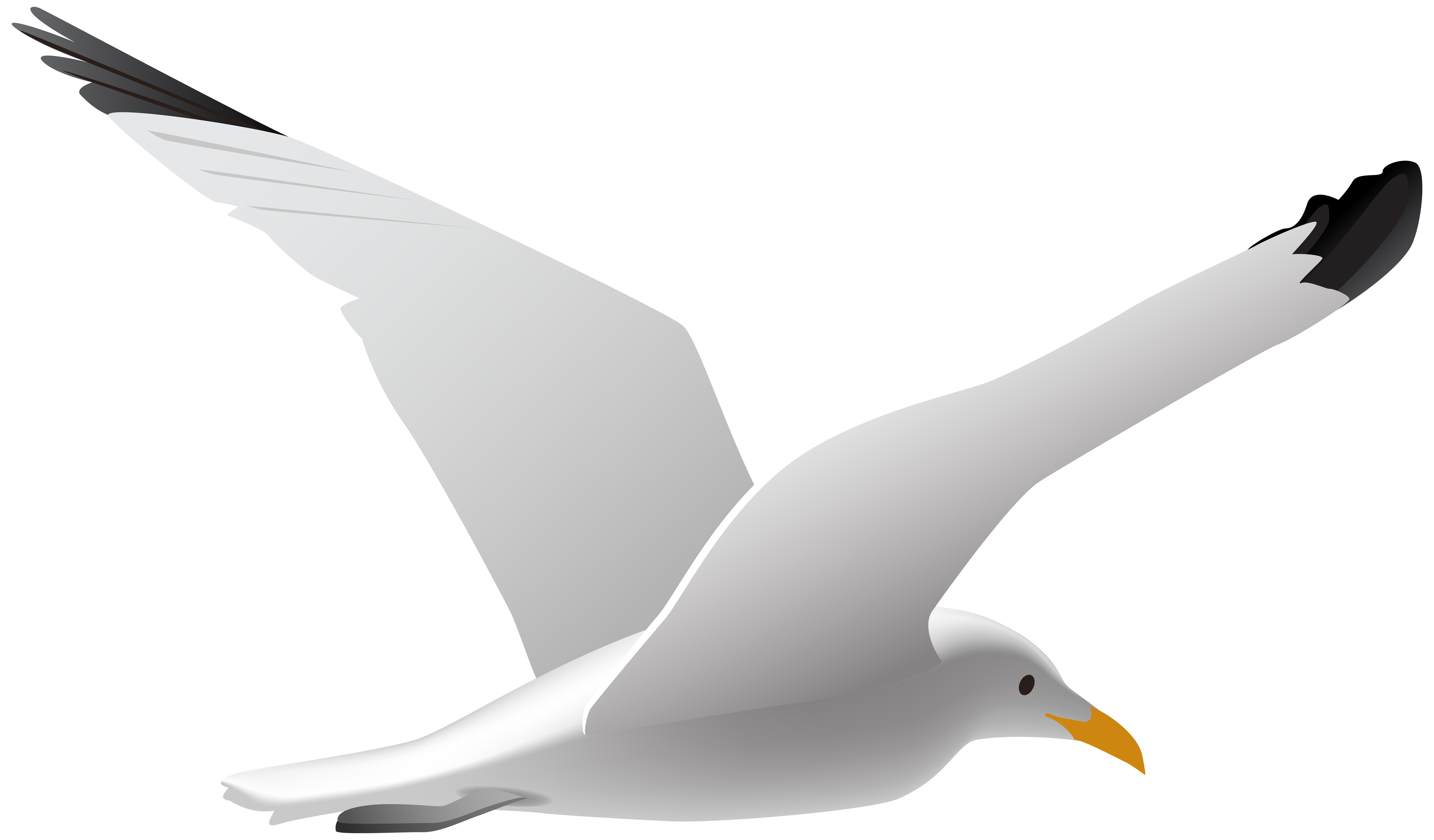 Seagull clipart Download Printable Seagull Free #8072