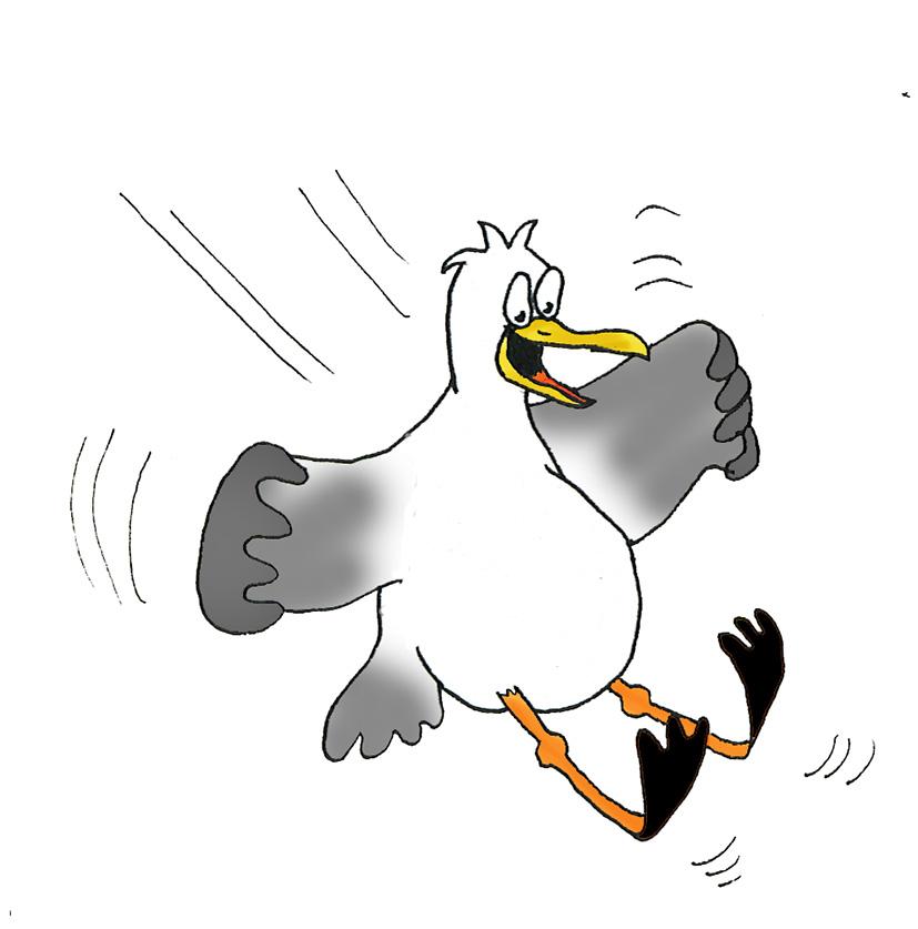 Drawn seagull cartoon #29954 clip cartoon of clipart