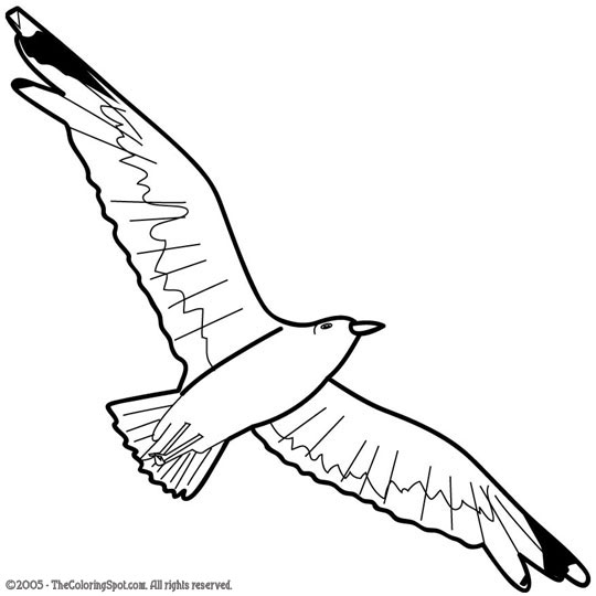 Drawn seagull gull Coloring Pinterest and drawings seagull