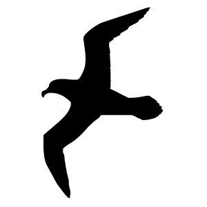Black clipart seagull Outline Seagull ClipartBarn Download clipart