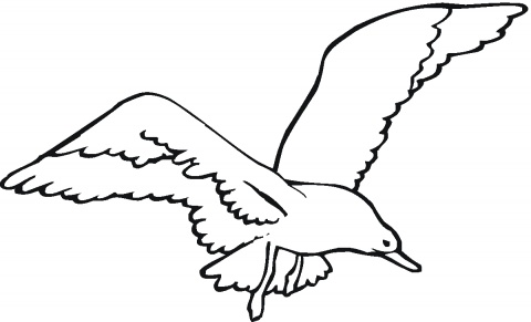 Seagull clipart outline #4