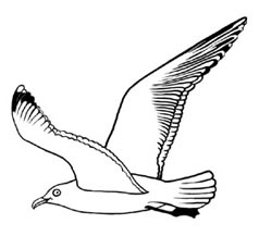 Seagull clipart outline #2