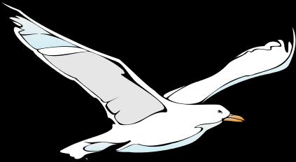 Seagull clipart transparent #5