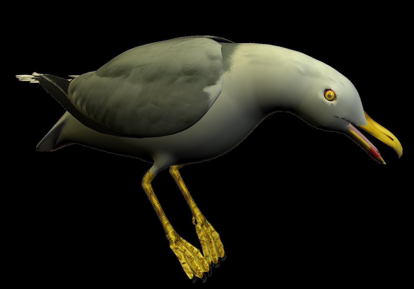 Seagull clipart transparent #14