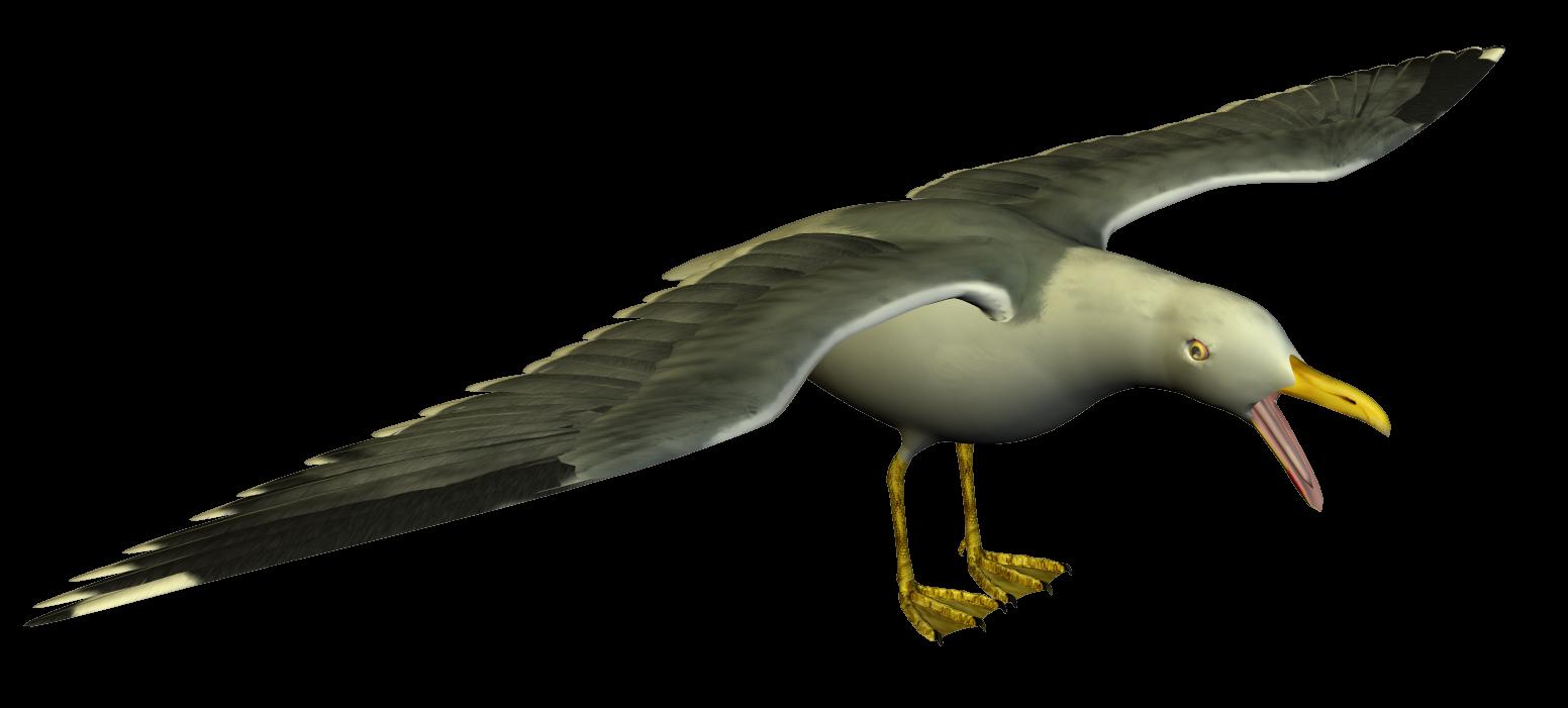 Seagull clipart transparent #11