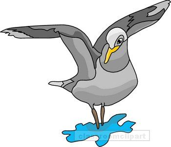 Seagull clipart transparent #10