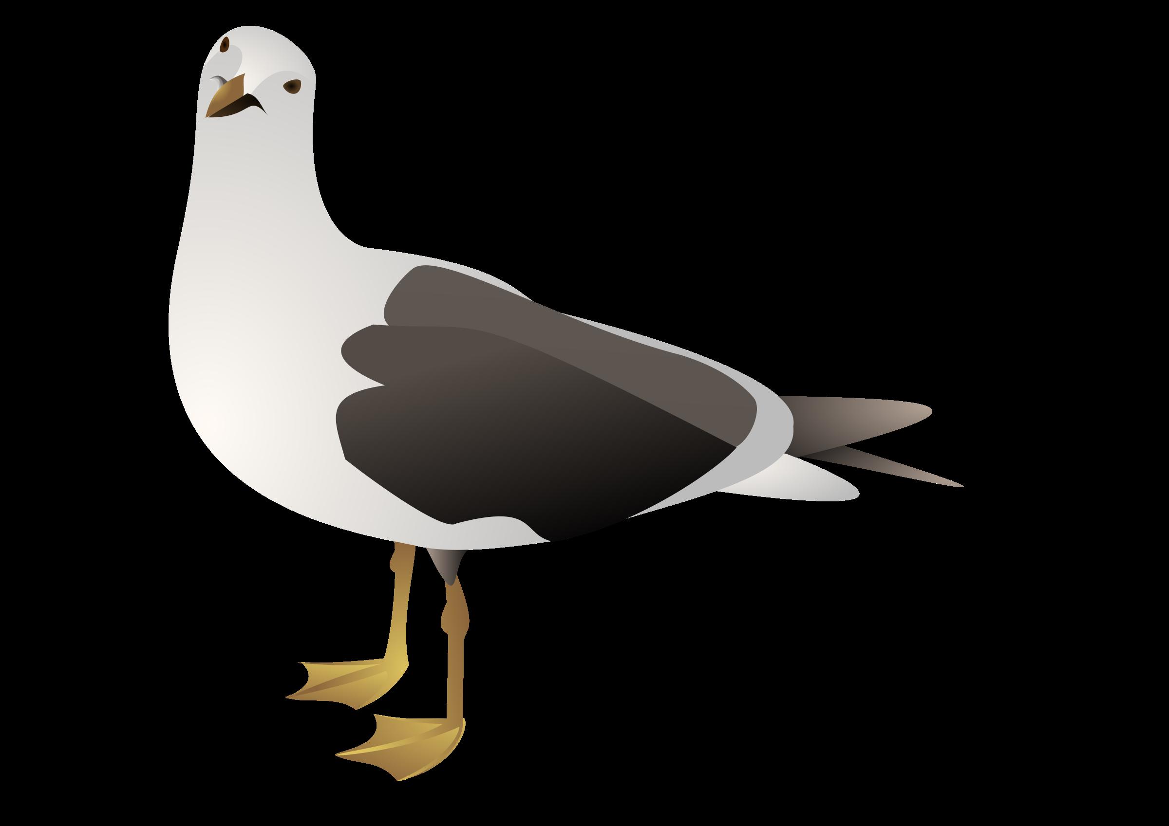 Seagull clipart transparent #7