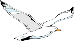 Drawn seagull seagul Vector com Clker Sea Gull
