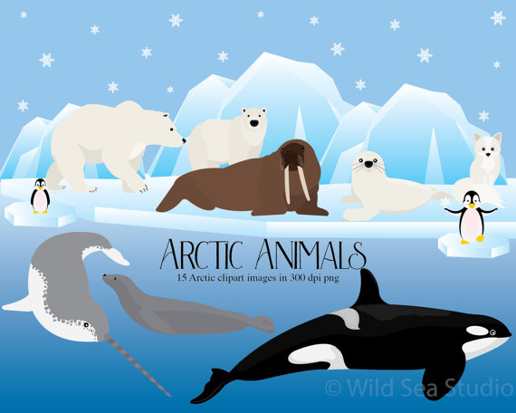 Arctic clipart snow animal Orca clipart snow Walrus from