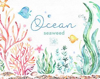 Seaweed clipart aquarium plant #6
