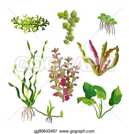 Seaweed clipart aquarium plant #1