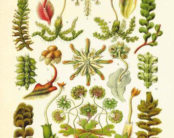 Seaweed clipart ocean plant #5