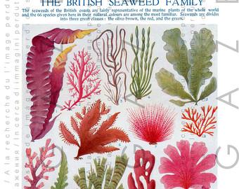 Seaweed clipart sea plant #8