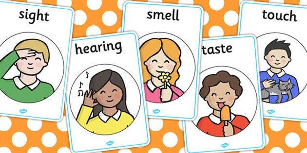 See clipart sense sight Smell hearing Posters touch me