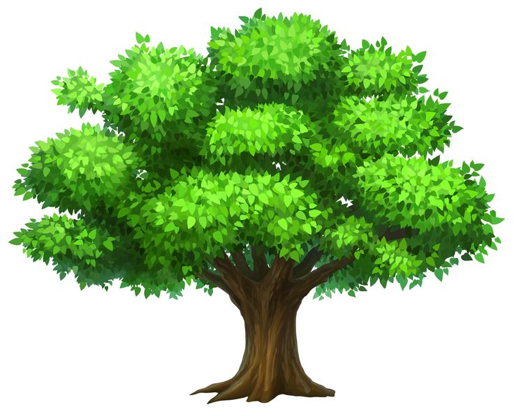 See clipart tree grass Pin more about Oak and