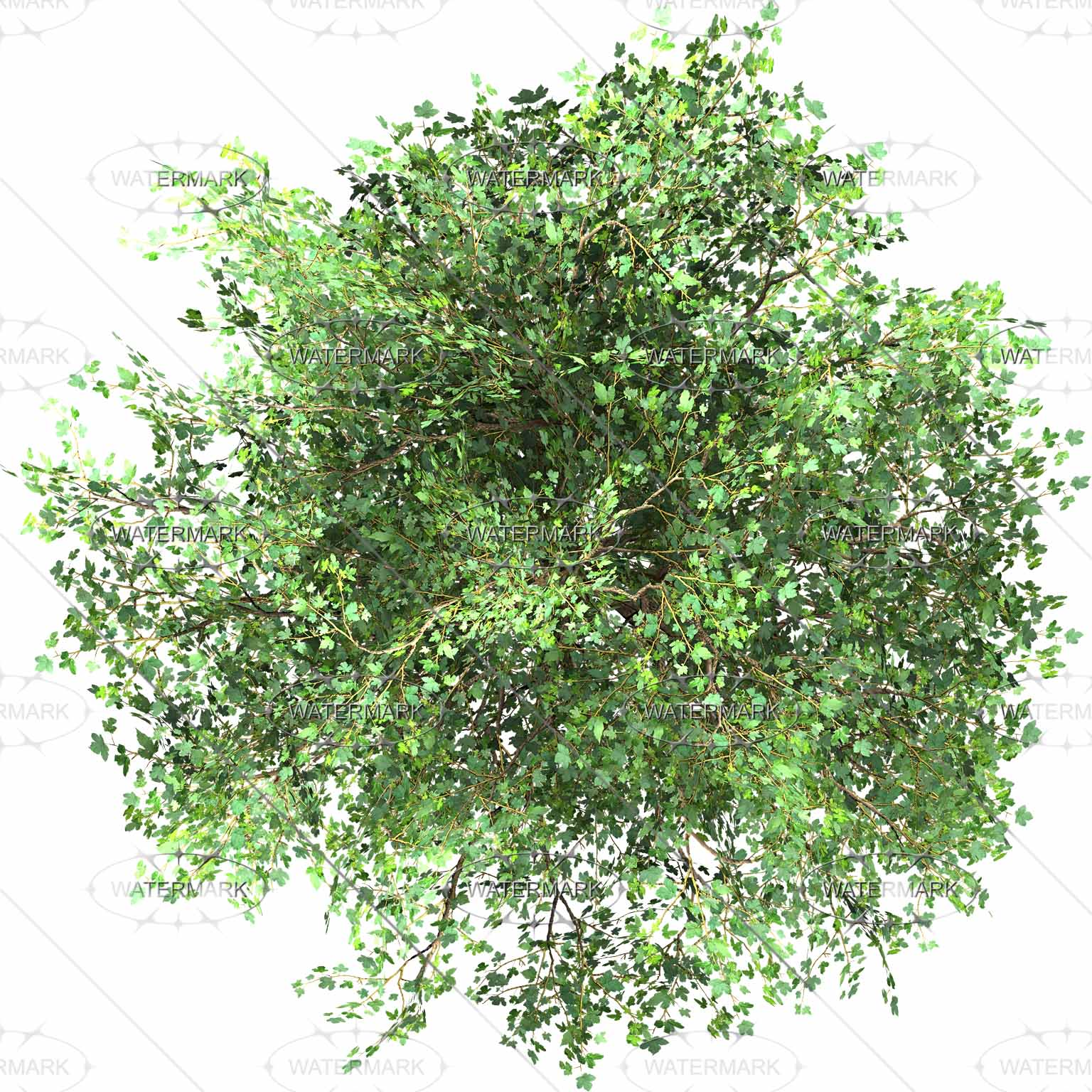 See clipart tree top Medium Entourage Free hiện a
