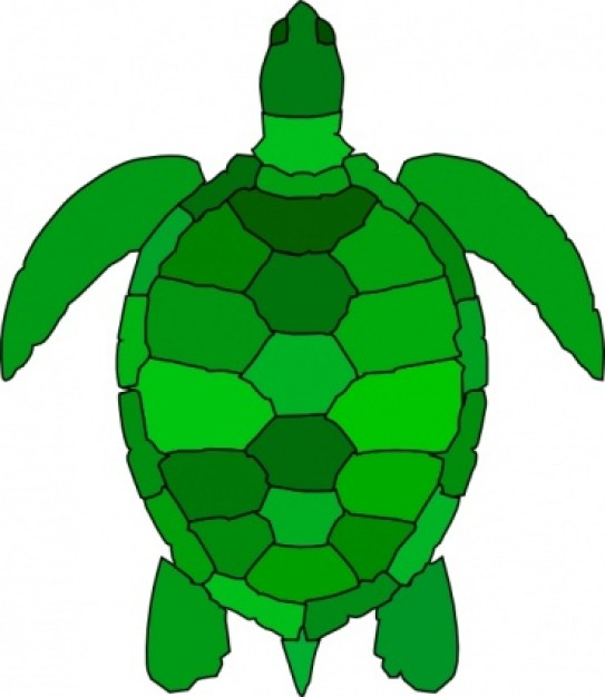 See clipart turtle top Images Turtle And Art Clip