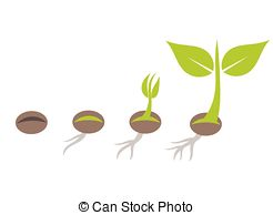 Beans clipart germination Clipart from plant growing