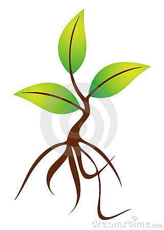 Seed clipart baby seedling Clipart roots shoot Plants clipart