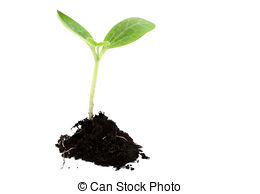 Seed clipart baby seedling  soil Life 551 royalty