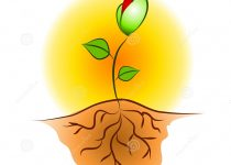 Seed clipart cute Seed Art Clip Seed Clip