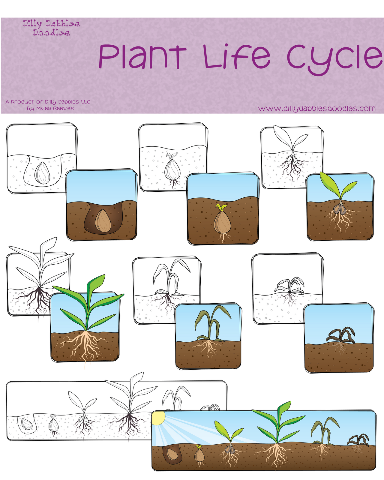 Seed clipart plant life cycle Life Cycle Clipart cycle life