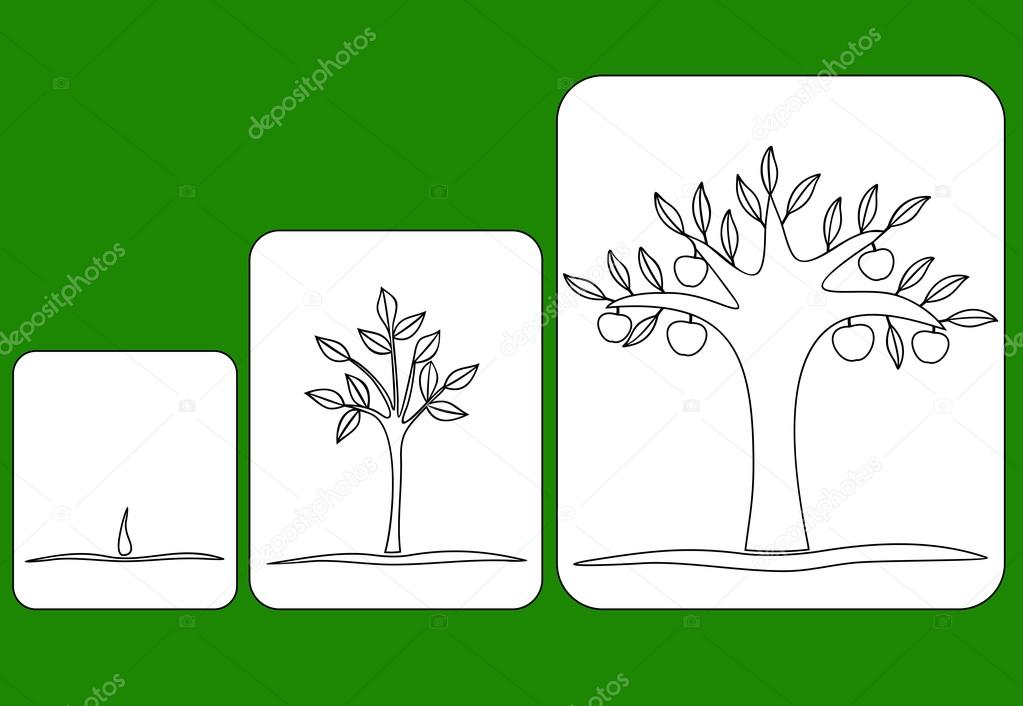 Seed clipart stage Vector tree to fruiting to