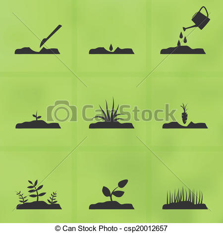 Seed clipart stage Vector set to grow 26