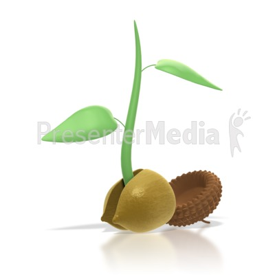 Acorn clipart seed Presentation Acorn Plant 4081 Sprout
