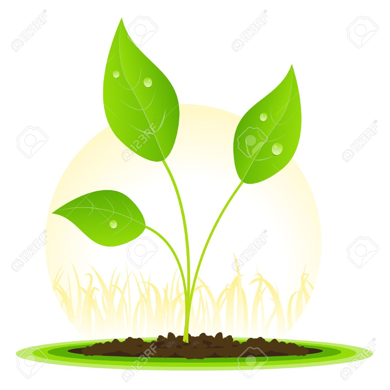 Seed clipart animated Excellent Seeds Design H Seeds