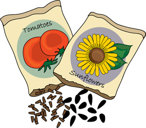 Seed clipart plant seed Clipart Sunflower Image Seed Clip