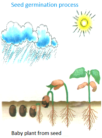 Seeds clipart little plant And How Big Plants for