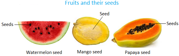 Seeds clipart mango seed And Prepare and Leaves apple
