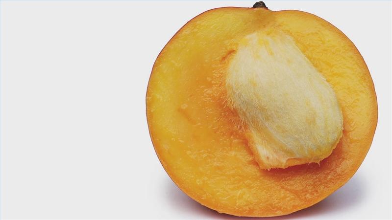 Seeds clipart mango seed Mango Plant a to Seed