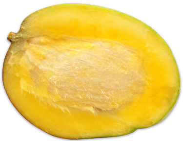 Seeds clipart mango seed Vedic away once So seed