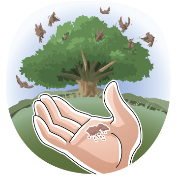 Plant clipart mustard seed The net the clipArts Mustard