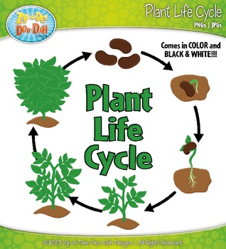 Seed clipart plant life cycle Stages Clipart Dee {Zip Designs}