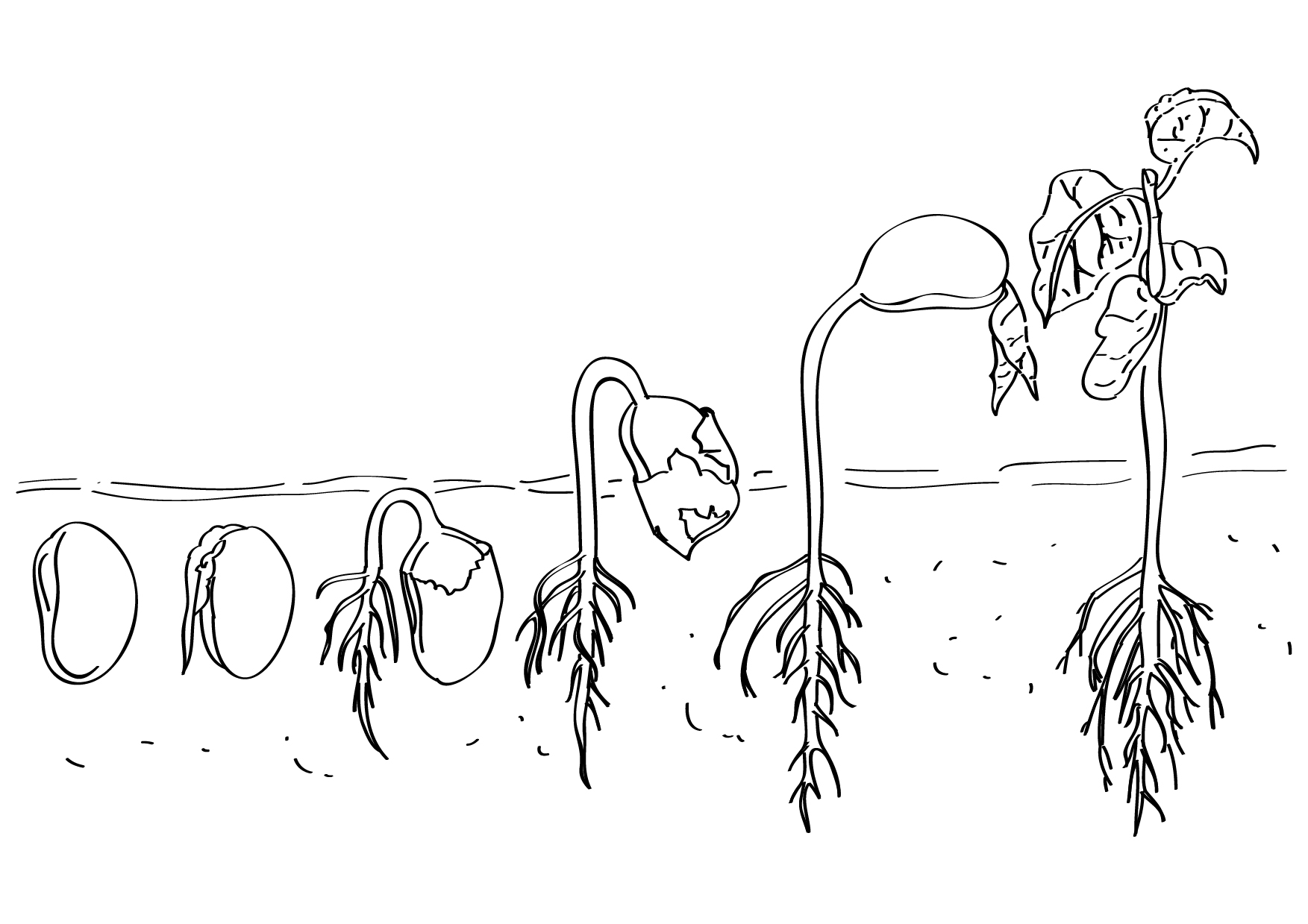 Seed clipart plant life cycle Of a of plant img_0102_eng_evs_life_cycle_non_living_organism