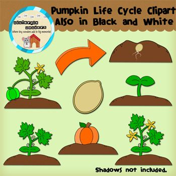 Seed clipart plant life cycle Plant 18 about best Pinterest