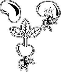 Seeds clipart seed germination Grow A seed Best? Seeds