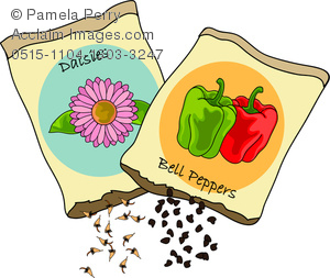 Seed clipart seed packet Bell Daisy Pepper Clip Daisy