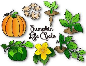 Seed clipart stage Pumpkin best images art about