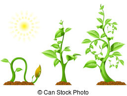 Seeds clipart stage  Clipart Three plant