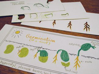 Seeds clipart stage Find Pinterest and Plants/Seeds on