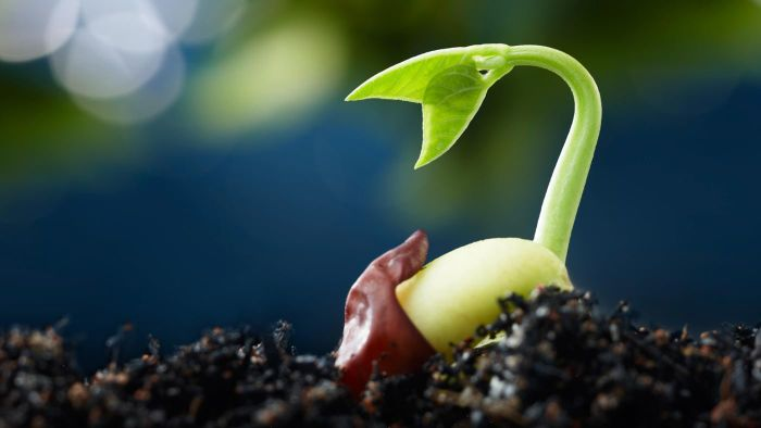 Seeds clipart stage What of five seed seed