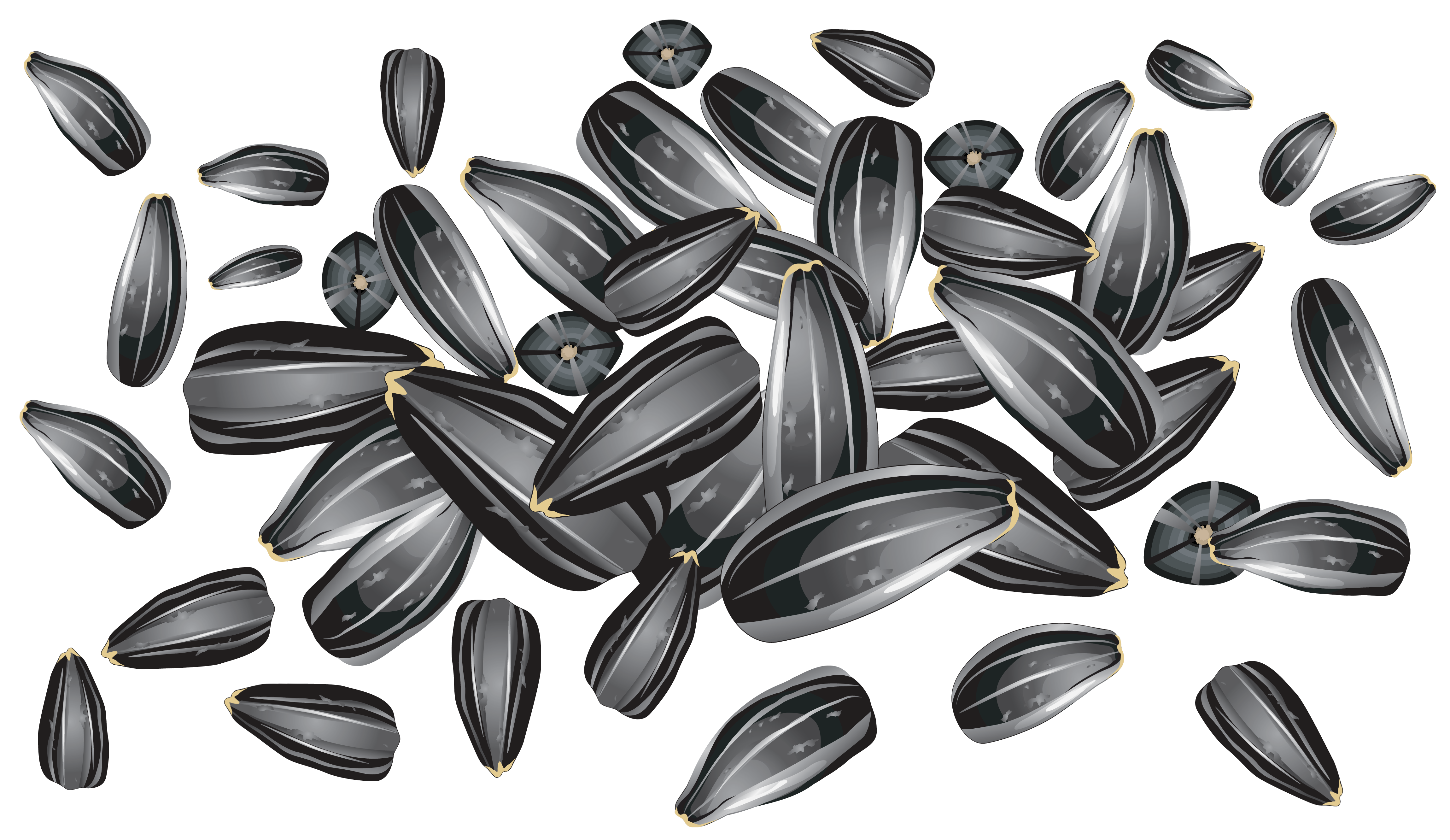 Seed clipart sunflower seed Yopriceville Picture View full High