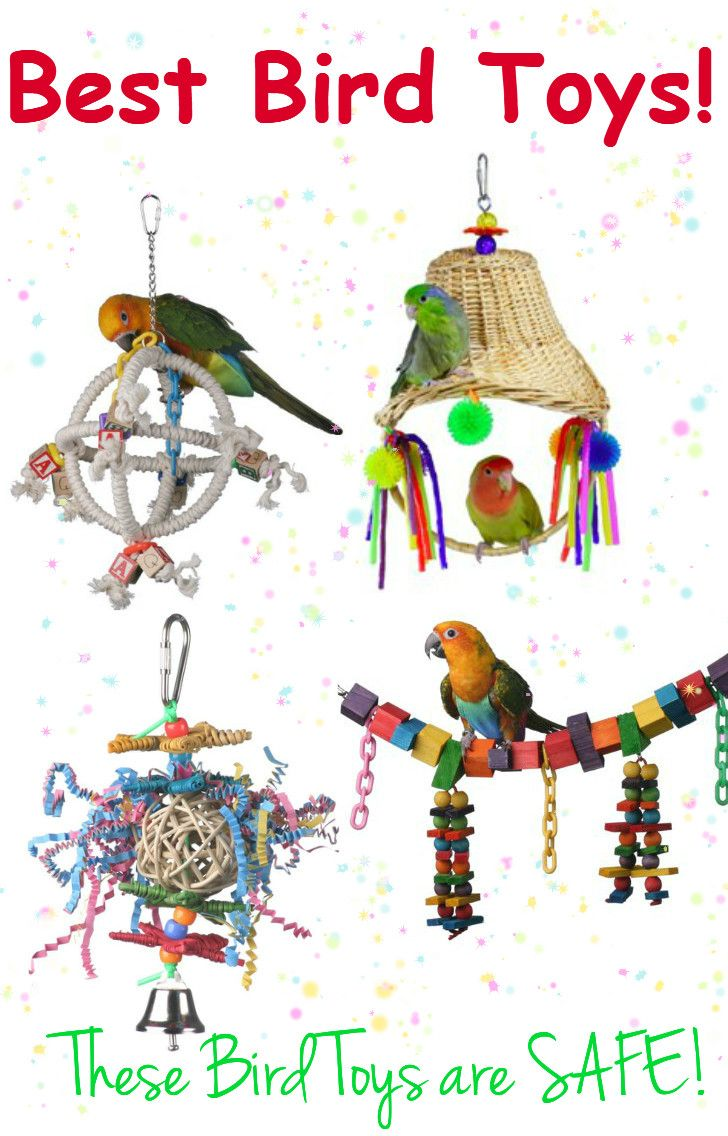 Seedy clipart bird Conures Best Here Parakeets Huge