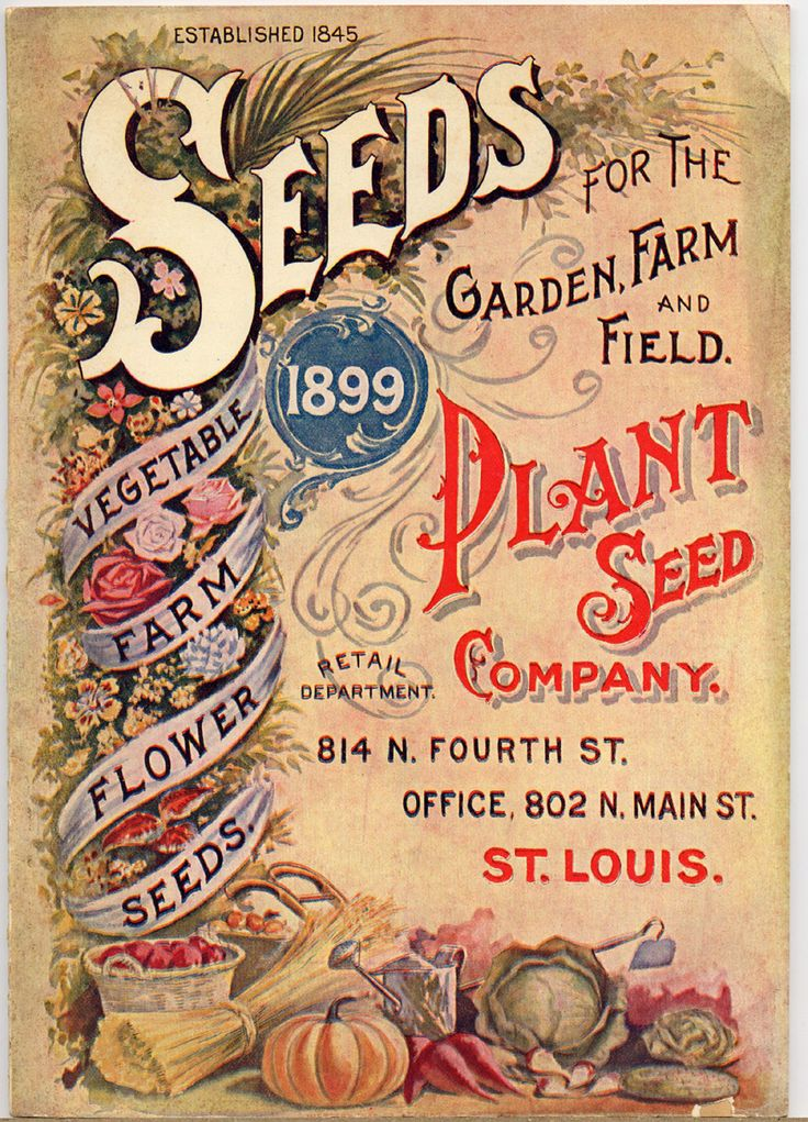 Seedy clipart fast 1899 Art 128 Seed images