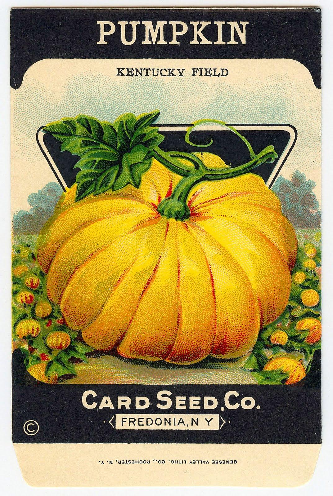 Seed clipart seed packet Pumpkin Packet Pumpkin Vintage Seed