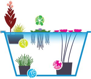 Serene clipart pond plant On a ideas 25+ Best